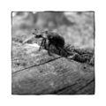 Käfer auf Baumstumpf