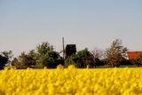 _MG_8950 Windmühle am Rapsfeld