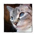 Katze Isolde 2