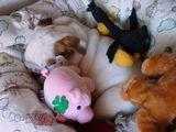 Diva als schlafende Prinzessin