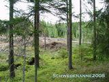 Etwas Wald steht ja noch...