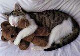 Katzenliebe..