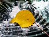 Leaf & Water
