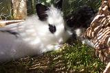 Kaninchen Bilder