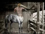 Homequus pelecanis