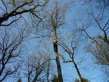 Carsten bei dem Versuch den Baumkletterweltrekord zu brechen