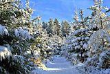 Wintermaerchen,...