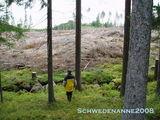 Oh jeh, der Wald ist weg!