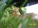 Paulinchen im Gras