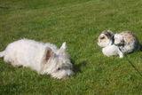 Hund und Kaninchen