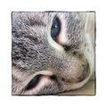 Katze Isolde